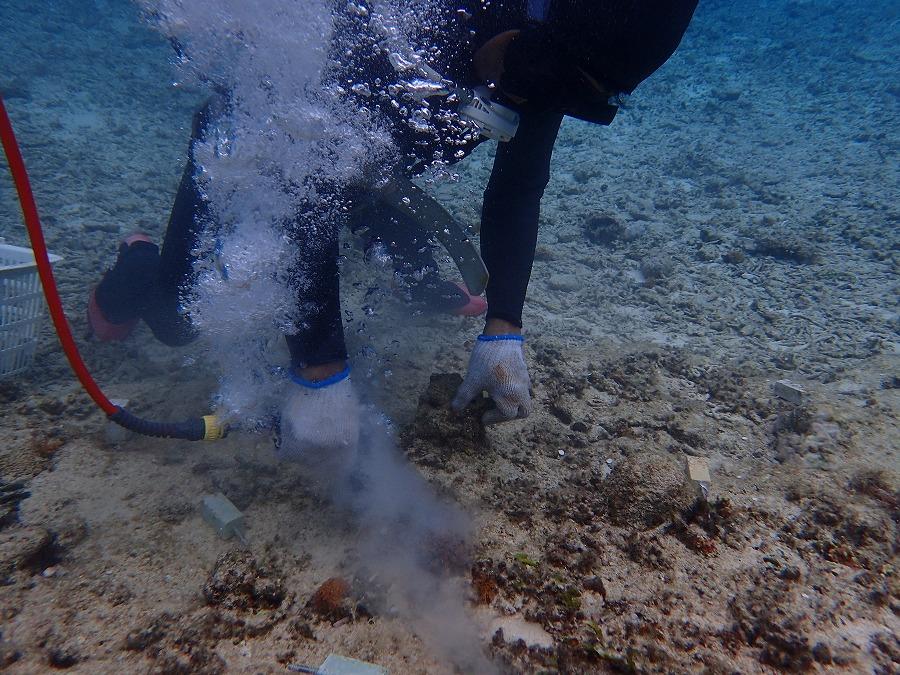 チーム美らサンゴ サンゴ植え付け